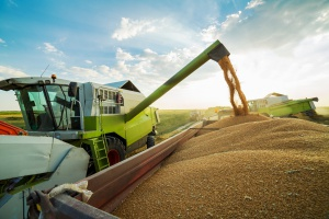Zbiory zbóż wyższe niż przed rokiem