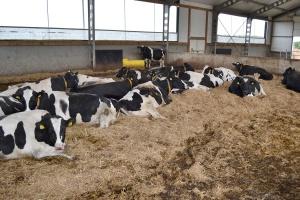 Spadek pogłowia krów mlecznych najwyższy od wejścia Polski do UE