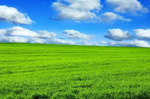 Podstawowe zasady stosowania bezchlorowych nawozów dolistnych Arkop na łąkach i pastwiskach