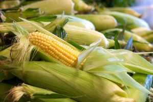 Nowy rekord ceny kukurydzy na MATIF