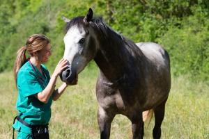 1200 weterynarzy podpisało list przeciwko wysyłaniu koni do japońskich rzeźni