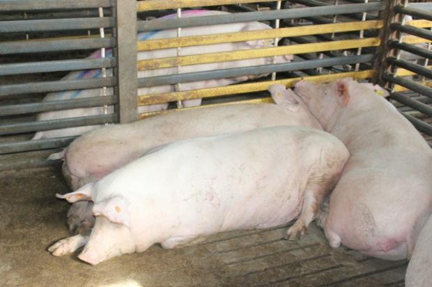 Jak ograniczyć szkodliwość aflatoksyn?