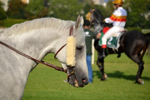 Senat za zmianami w ustawie o wyścigach konnych