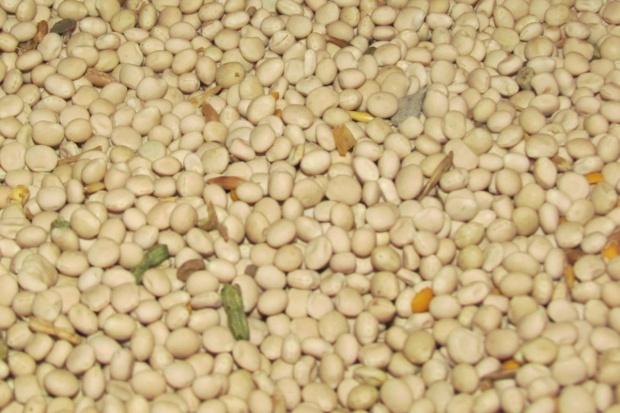 Jakie dawki nasion roślin strączkowych stosować w tuczu?