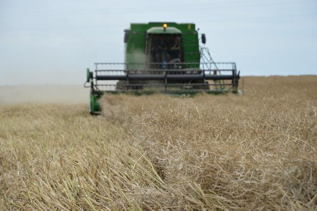 Ukraina: Więcej soi i słonecznika, mniej rzepaku