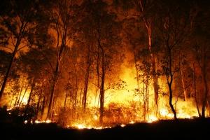 Tylko w maju lasy płonęły już 970 razy