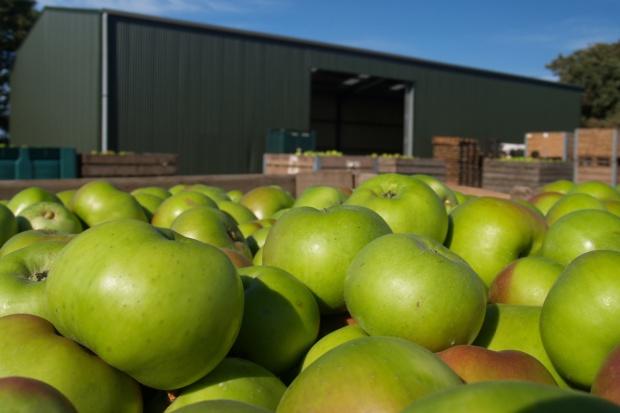 Jurgiel: Liczymy na otwarcie chińskiego rynku na polskie owoce i drób