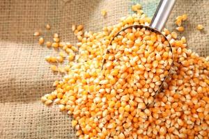 Nowe maksima cenowe kukurydzy