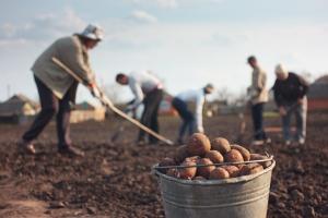 Coraz więcej pracy dla Ukraińców