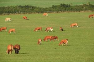 Wzrost globalnego spowolnienia produkcji mleka