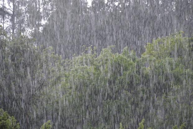 Ulewne deszcze to mniej skrzypionki