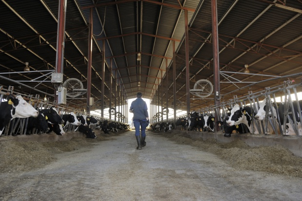 Jest stawka pomocy dla producentów mleka