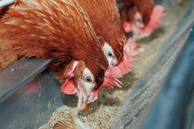Projekt noweli o GMO w paszach
