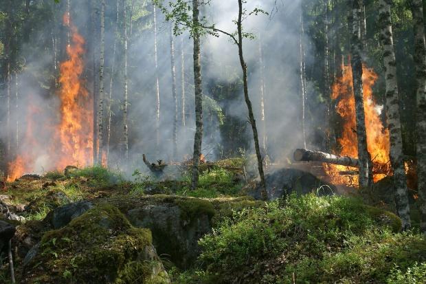 W lasach trzeci, najwyższy stopień zagrożenia pożarowego