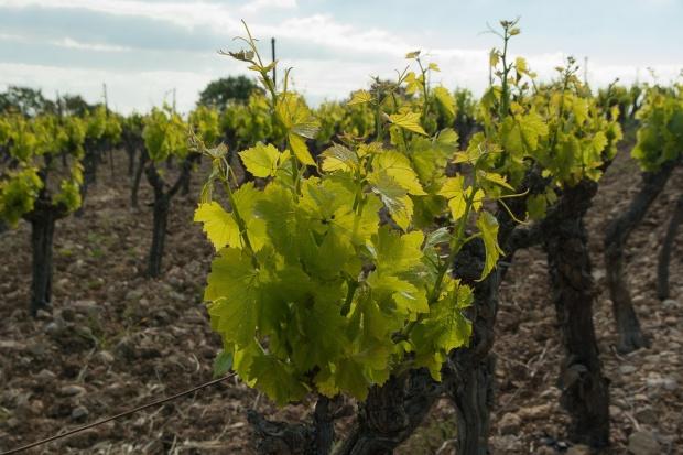 Francja: Rosną ceny gruntów rolnych