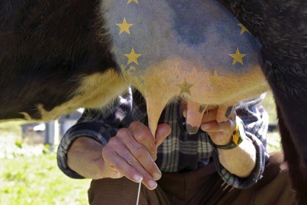 Mleku może pomóc tylko Unia Europejska