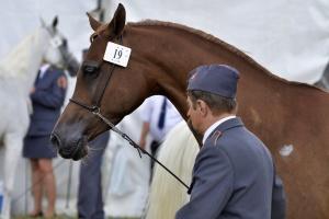 Wybór prezesa stadniny koni w Janowie - w przyszłym tygodniu