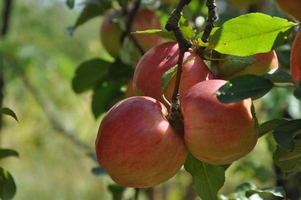 UE: Wsparcie dla producentów owoców i warzyw