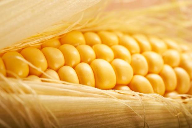 Kolejny tydzień wzrostu cen kukurydzy