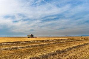 IERiGŻ: W 2016 zbiory zbóż wyniosą ok. 29-30 mln ton