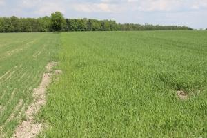ANR: Ponad 400 wniosków o sprzedaż ziemi osobom niebędącym rolnikami