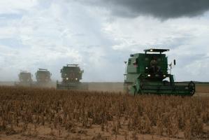 Rosja zwiększyła w tym sezonie eksport soi