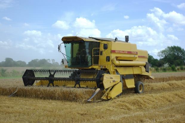 Niemcy: Prognoza zbiorów zbóż lekko w górę