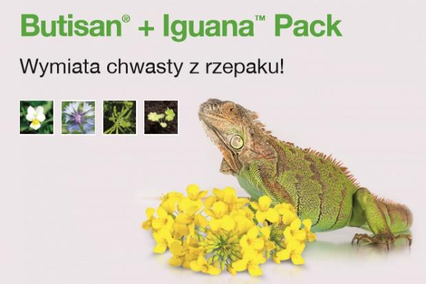 Nowość: Butisan® + Iguana™ Pack – Wymiata chwasty z rzepaku!