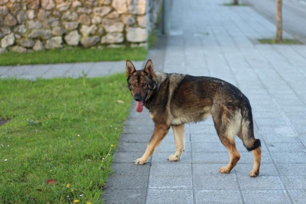 TOZ: Porzucanie zwierząt do przestępstwo - rusza kampania społeczna