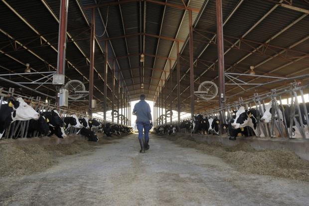 PSL domaga się od rządu interwencji na rynku mleka
