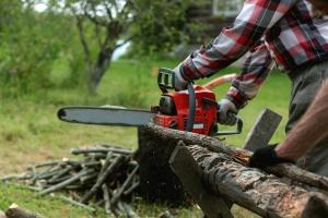 Kiedy rolnik wytnie drzewo bez opłaty?