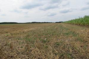 Będzie szczelny rejestr cudzoziemców nabywających w Polsce ziemię