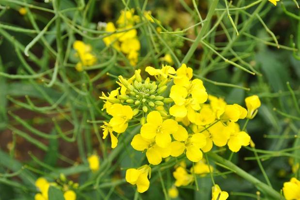 Mało znane funkcje wapnia w roślinie