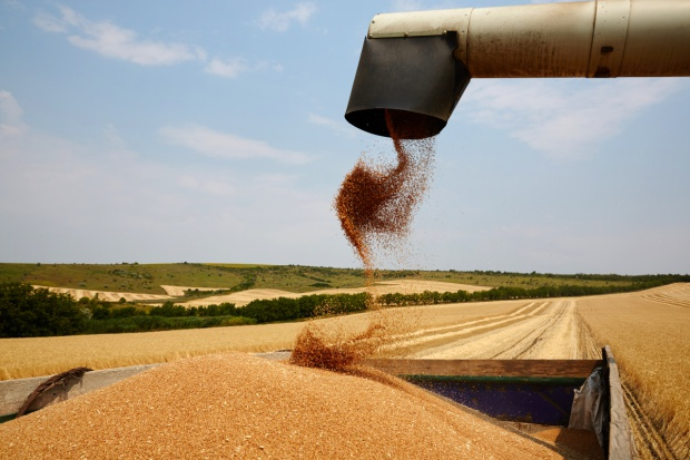 Rekordowe zbiory zbóż w Rosji coraz bardziej prawdopodobne
