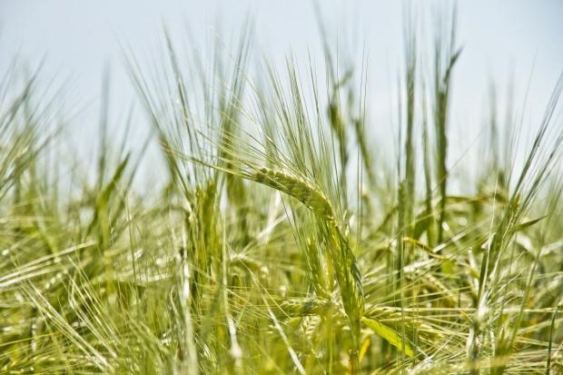 Credit Agricole ubezpiecza rolników