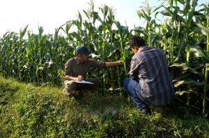 Dłuższe kontrole dywersyfikacji upraw