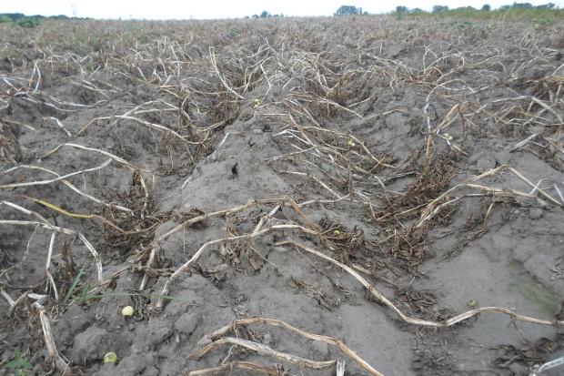 Nowe ubezpieczenie na wypadek suszy