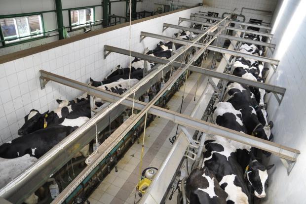Morawiecki o rozwoju woj. podlaskiego: m.in. w oparciu o mleczarstwo