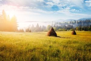 W Bieszczadach trwają leśne sianokosy – leśnicy przygotowują karmę dla żubrów