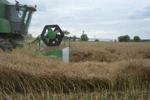 KZPRiRB: Ile rzepaku zbiorą rolnicy w tym sezonie?