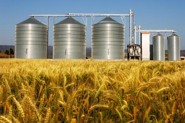 Powracają wzrosty cen zbóż