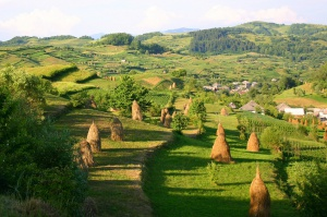 Prezydent Rumunii podpisał ustawę popierającą rumuńskich rolników