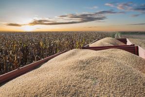 Rząd: GMO w paszach będzie można stosować do 2021 r.