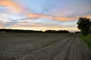Senacka komisja rekomenduje przyjęcie noweli ws. obrotu ziemią rolną bez poprawek