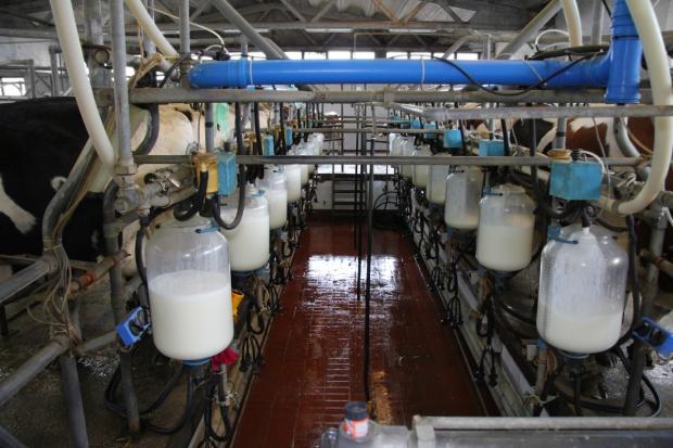 UE: Maleją dostawy mleka