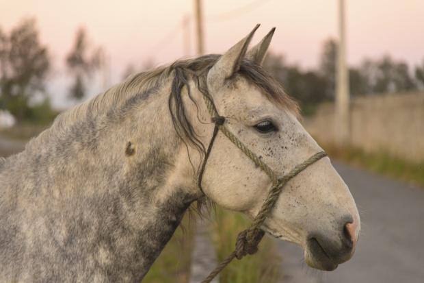 Raport: Na targach zwierząt ignorowane przepisy