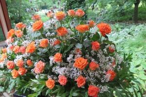 Róże w Ogrodzie Botanicznym UW