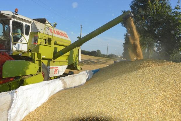 SG: Aktualna prognoza produkcji zbóż