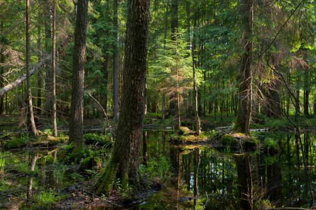 Resort środowiska przesłał KE odpowiedź ws. Puszczy Białowieskiej