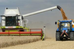 Średnia krajowa cena skupu pszenicy wyniosła 63,68 zł za 1 dt